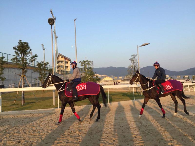 """投资37亿港元兴建的香港赛马会从化马场于2018年8月正式开幕,为香港赛马运动开启崭新的""""两地马房运营模式""""。"""