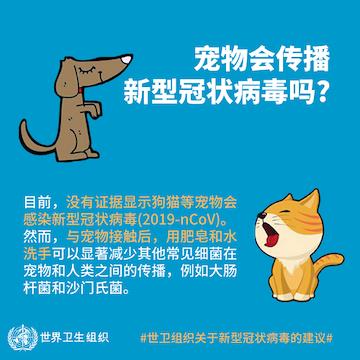 世界动物卫生组织答一财:目前无证据表明宠物会传播新冠肺炎