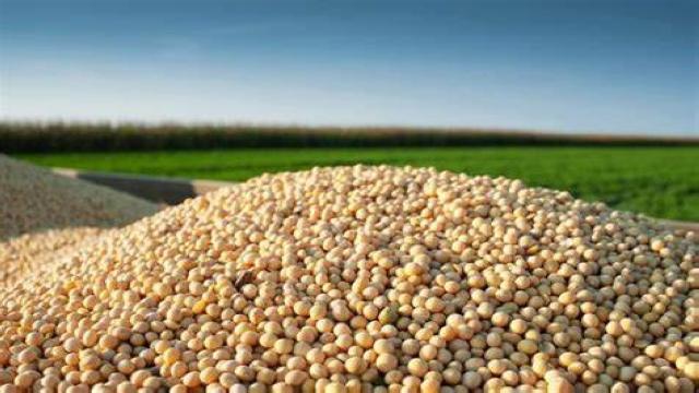 阿根廷豆农囤货待价而沽,新冠冲击国际农产品供应链