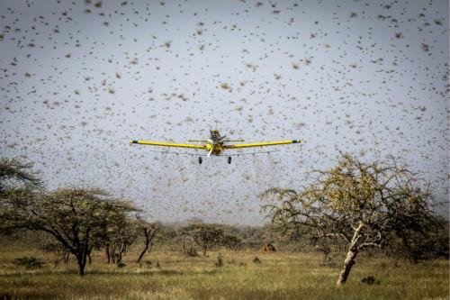 粮农组织答一财:彻底根除蝗虫不现实,唯一方法是空中喷农药