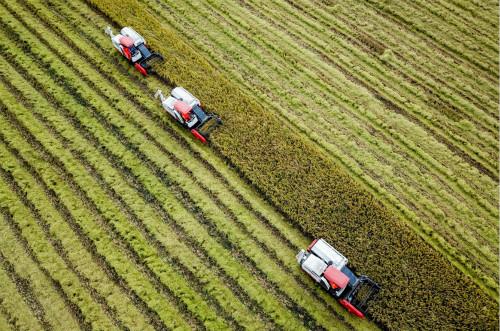粮食价值链的复杂性以及贸易和运输的重要性,令粮食市场变得脆弱。