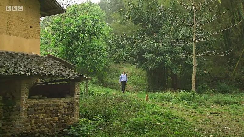 纪录片中,杜甫被还原成一个有着喜怒悲笑的清淡人,回溯了他从出生到入仕,跌宕首伏的一生,在不起劲与饥饿当中照样笑不益看的人生态度。