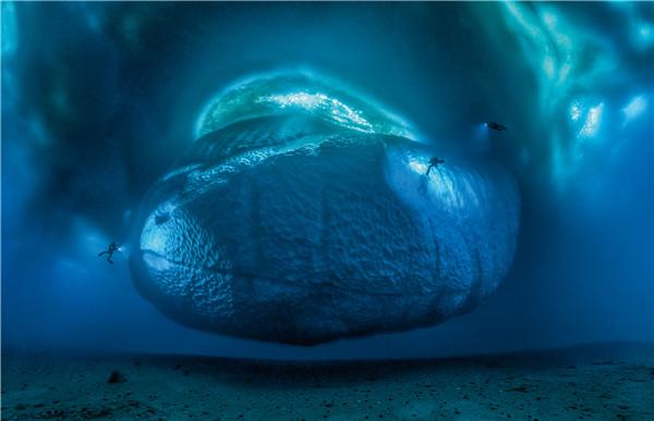 """极光般的奥秘深海幻景  宝珀""""汉斯·哈斯五十噚大奖"""" (Hans Hass Fifty Fathoms Award)获得者、  全球顶尖海洋生物学家、水下摄影家劳伦·巴列斯塔(LaurentBallesta)作品"""