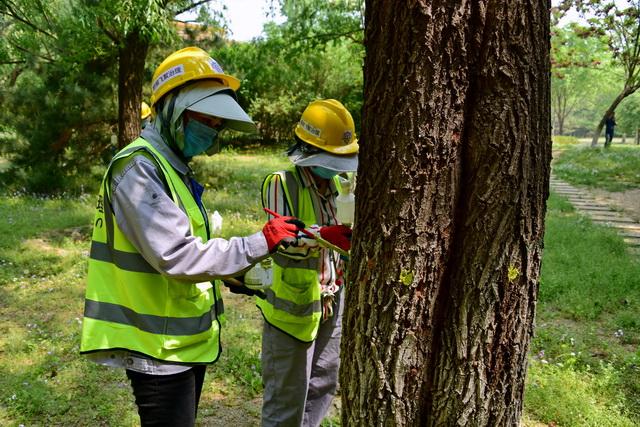 我国在一些生物安全关键技术、核心技术的原始创新能力方面仍存在短板。图为园林工人在北京奥林匹克公园治理树木。摄影/章轲