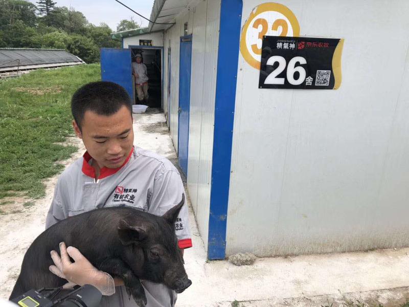 京东农牧智能养殖解决方案支持的农村养殖园区。   中国社会科学院供图