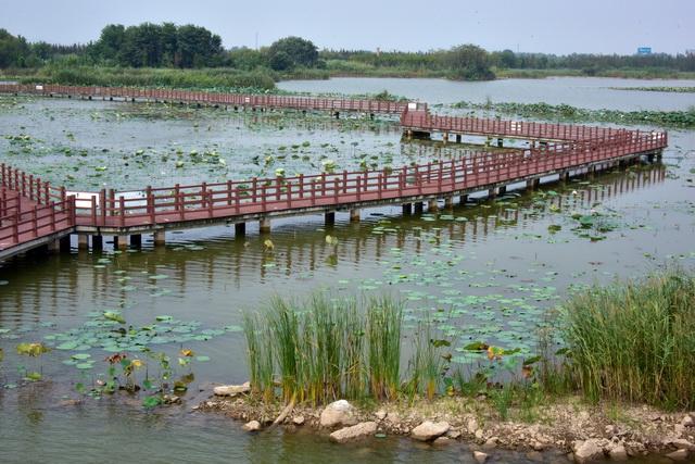 湖泊水生态环境健康与否,直接关系到沿湖地区居民的生产生活。摄影/章轲