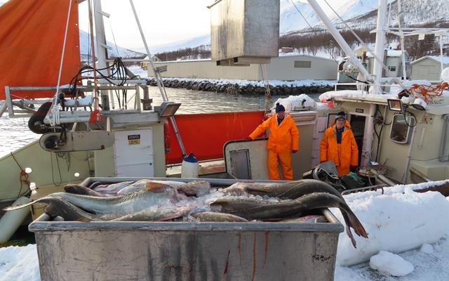 鳕鱼捕捞季满载而归的挪威渔民。摄影/钱小岩
