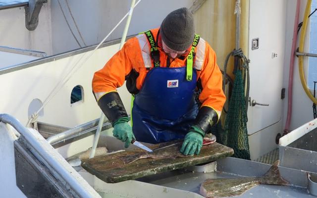 挪威渔民在船上加工鳕鱼。摄影/钱小岩