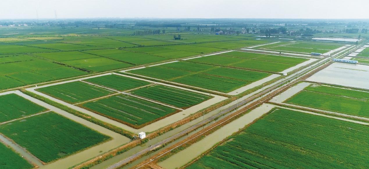 """美好置业现代农业基地以""""虾稻共作""""为切入点,打造""""稻渔综合种养""""生态农业产业"""