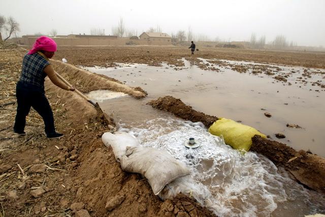 在西北地区,有些农民们仍延用大水漫灌式的浇田做法。摄影/章轲
