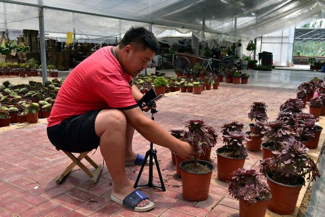 7月8日,博雅园艺主管邱超在多肉植物大棚里直播。摄影/章轲