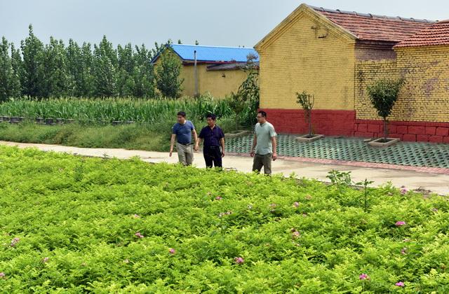 8月11日,祝阿镇王坊村,服务队队员正在与村干部查看育苗园玫瑰长势情况。摄影/章轲