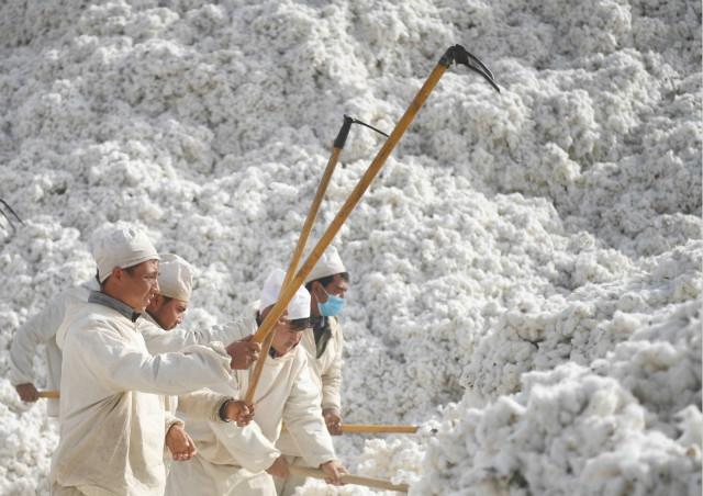 2019年10月27日,新疆阿瓦提县新疆鲁泰丰收棉业有限责任公司工人在棉花加工厂工作。新华社图。