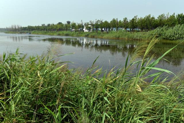 祝阿镇贾坊村的阡陌纵横、水绿交织的田园风光。摄影/章轲
