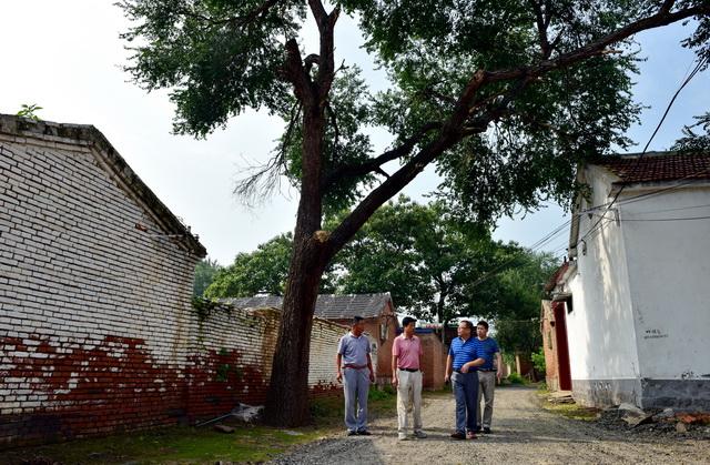 祝阿镇省派乡村振兴服务队在贾坊村调研。摄影/章轲