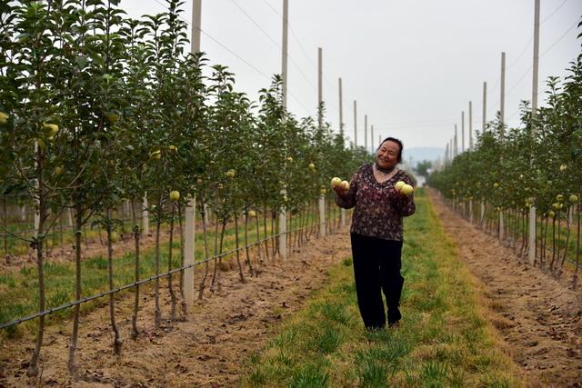 9月9日,海升永寿甘井苹果基地工作人员周会在基地里。摄影/章轲