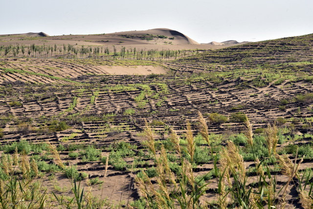 京津风沙源工程区28个贫困县全摘帽,农民卖果品年入2万多