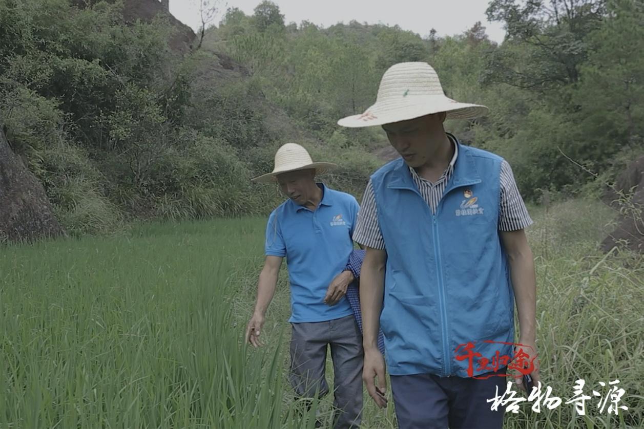 """方军和""""老村长""""张练功在和平村的稻田里查看水稻长势。"""