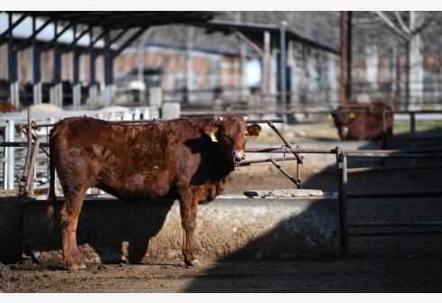 推动扇贝牛肉清酒出口,日本力争6月底前批准RCEP