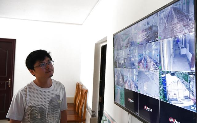 重庆市万州区一生猪生态养殖基地,工作人员通过视频监控系统查看养殖基地情况。本文配图均自新华社资料