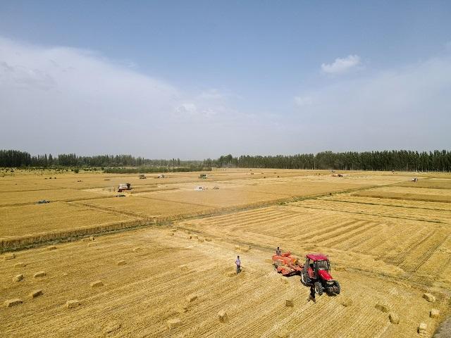 6月19日,新疆库车市齐满镇农民驾驶联合收割机收割小麦(无人机照片)。新华社图。