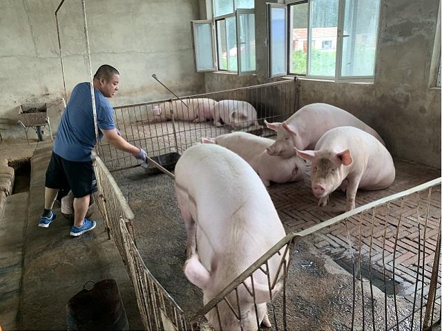 2020年8月6日,内蒙古自治区兴安盟乌兰浩特市乌兰哈达镇白音特布斯格嘎查农民蒋鹏在自家猪圈里铲猪粪。新华社图。