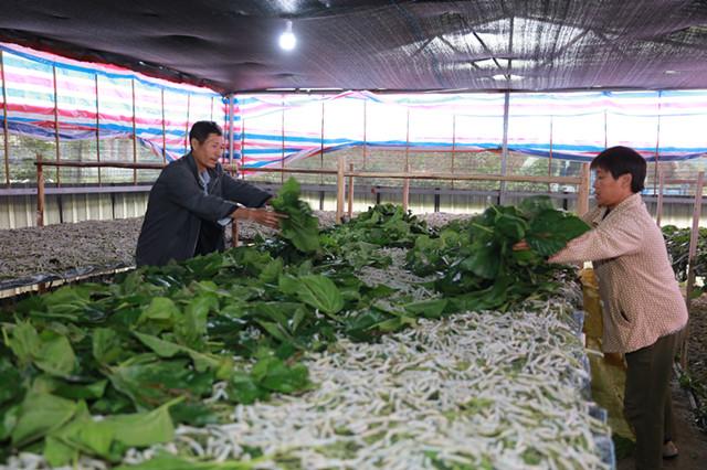 蛋白饲料高度依赖进口 多渠道增加优质饲草供应