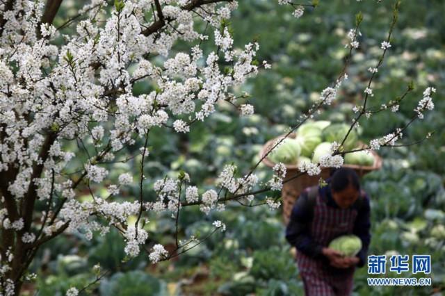 #(经济)(6)春天的收获