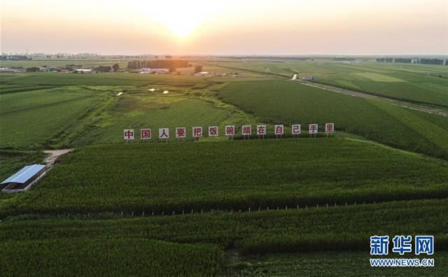 (新华全媒头条·图文互动)(6)为现代农业探新路——来自吉林梨树的田野报告