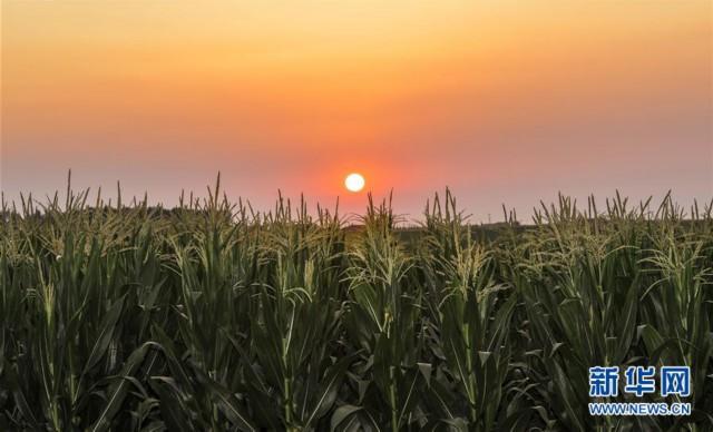 (新华全媒头条·图文互动)(2)为现代农业探新路——来自吉林梨树的田野报告