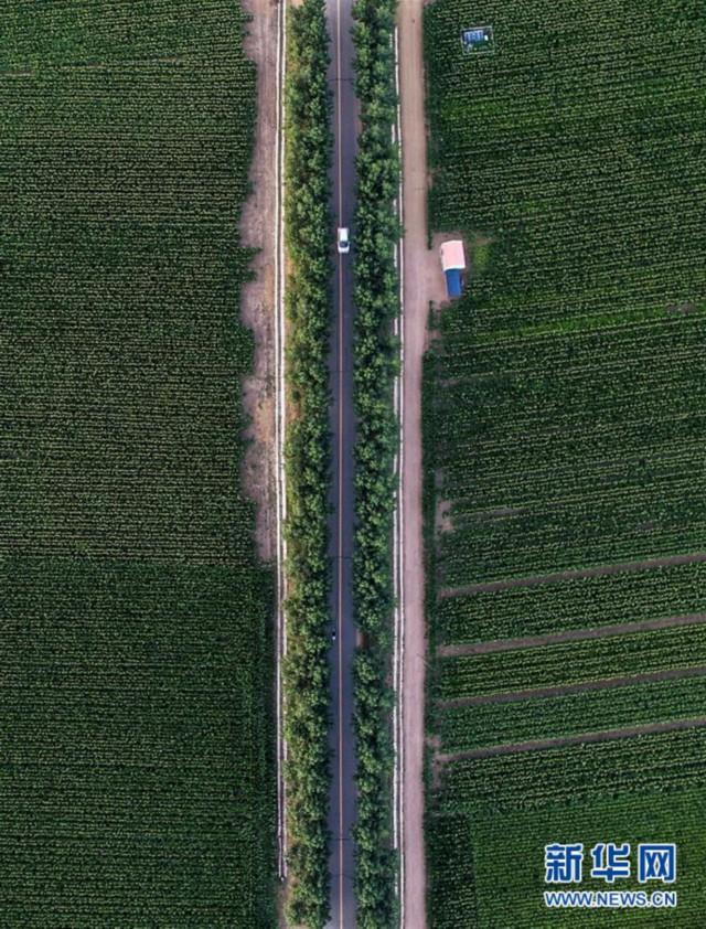 (新华全媒头条·图文互动)(3)为现代农业探新路——来自吉林梨树的田野报告