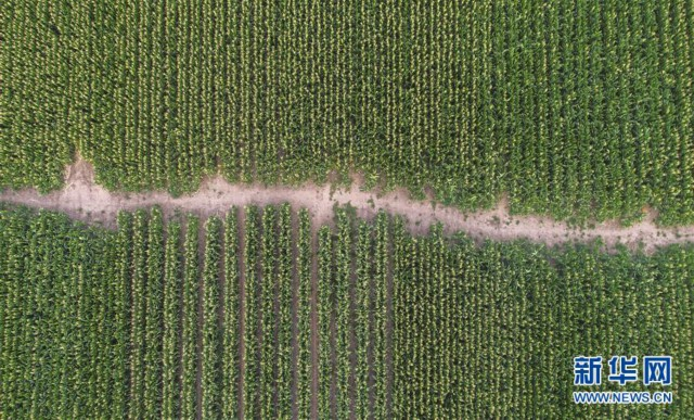 (新华全媒头条·图文互动)(4)为现代农业探新路——来自吉林梨树的田野报告