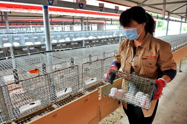 揭秘野生动物非法贸易路线图:仅次于军火毒品的走私行业